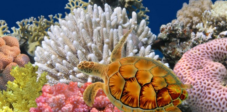 destination-sea-life-bangkok