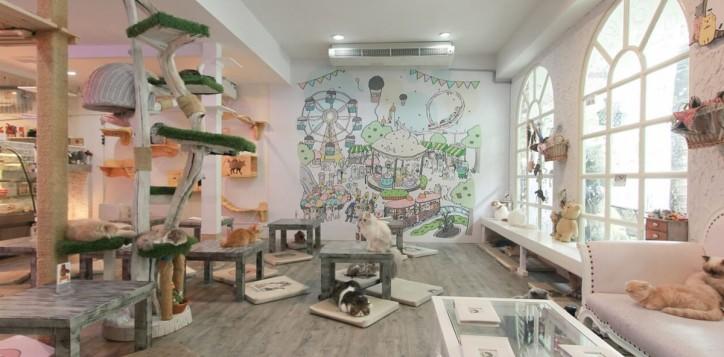 destination-cat-cafe