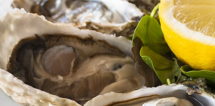 1800x450-happy-oyster-2